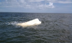 Capsized Vessel Charleston Harbor